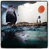 Penguins enjoying their very own sun.