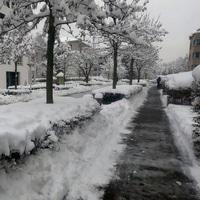 Snowy Zurich
