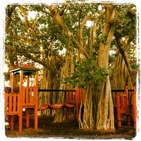 cool playground in a tree