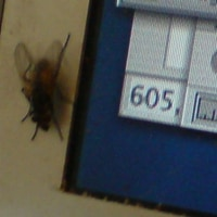 Damn flies