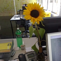 nature in the office