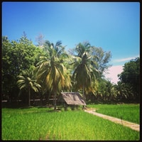 in a rice field (in the middle of the town)