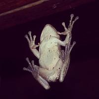 frog on the window ;)